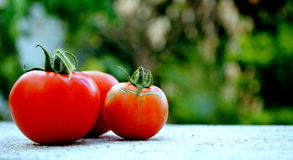 Garden-grown goodness. Three vine-ripened tomatoes on a white textured surface against green background Stock Photos