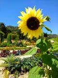 Garden happiness Stock Photo