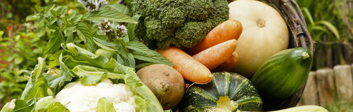 Garden harvest. Selection of freshly harvested vegetables and herbs from a home garden or allotment stock photography