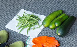 Garden Harvest. Fresh from the garden - zucchini & green beans Royalty Free Stock Photos