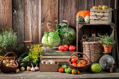 Garden with harvested vegetables and fruits royalty free stock photo