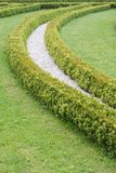 Garden hedge royalty free stock photo