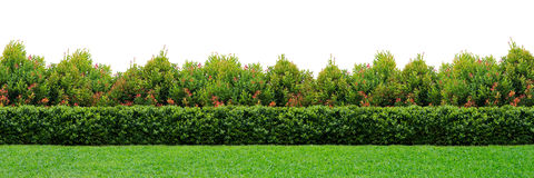 Garden hedge Stock Images