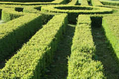 Garden hedge. Part of a garden hedge maze Stock Images