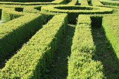 Garden hedge Stock Images
