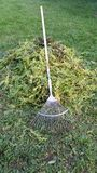 Garden hedge cuttings in France. Pile of garden conifer hedge cuttings with long handled rake Royalty Free Stock Photo