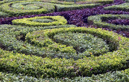 Garden hedges background Stock Photography