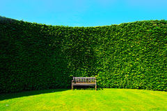 Garden hedges with a bench. Garden hedges with a wooden bench royalty free stock photo