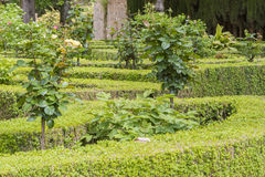 Garden. With hedges and roses Royalty Free Stock Photos