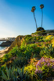 Garden at Heisler Park, in Laguna Beach  Royalty Free Stock Photos