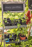 Garden herb nursery Royalty Free Stock Image