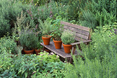 Garden with herbs Stock Photo