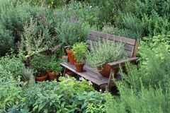 Garden with herbs Royalty Free Stock Photography