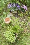 Garden herbs Royalty Free Stock Photography