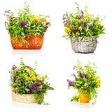 Garden herbs Stock Photography