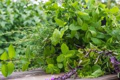 Garden herbs, medicinal plants Royalty Free Stock Image