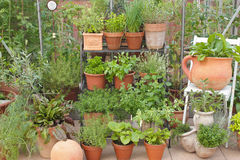 Garden herbs in pots and greenhouse Royalty Free Stock Photography