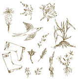 Garden herbs sketch with birds, plants, gumboots Stock Photos