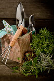 Garden herbs with utensil Royalty Free Stock Image