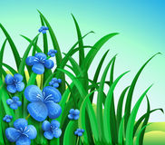 A garden in the hill with blue flowers Stock Photography