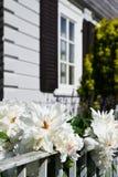 Garden home Stock Image