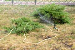 Garden Hose Royalty Free Stock Photo