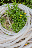 Garden hose on the flower plant. Garden water hose and green little plant in the garden stock photography