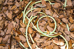 Garden hose-pipe outdoor Royalty Free Stock Photography