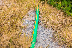 Garden hose-pipe outdoor Stock Photography