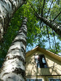 Garden house. Wooden summer - house among the high birches Stock Photos