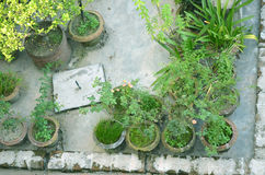 Garden in house Stock Photos