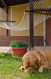 Garden house, hammock and sleeping dog Royalty Free Stock Photography