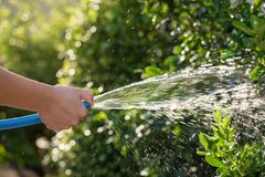 pour water to garden by rubber hose royalty free stock photo