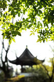 Garden of the Humble Administrator, Suzhou Royalty Free Stock Photo
