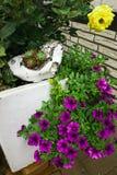 Garden ideas. Vintage design. Colourful flowers Stock Photos