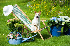 Garden idyll with dog Royalty Free Stock Image