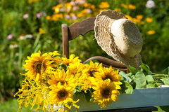Garden idyll. With sunflowers on a chair stock photography