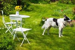 Garden idyll Stock Images