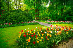 Garden In Keukenhof, Tulip Flowers. Netherlands Stock Photo
