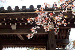 Garden In The Ryoan-ji Temple Royalty Free Stock Photography
