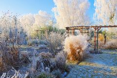 Free Garden In Winter With Hoarfrost On A Cold Day Royalty Free Stock Photo - 155342775