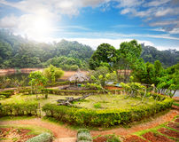 Garden in India Stock Image