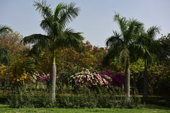 Garden in India Royalty Free Stock Photography