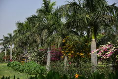 Garden in India Stock Photos