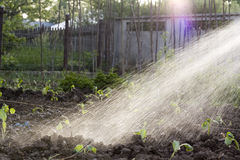 Garden irrigation Stock Photos