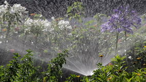 Garden Irrigation Spray watering flower bed Stock Photography