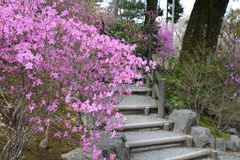 Garden in Japan Royalty Free Stock Photography