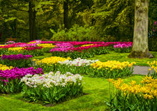 Garden in Keukenhof, colorful tulip flowers and trees. Netherlands Royalty Free Stock Photos