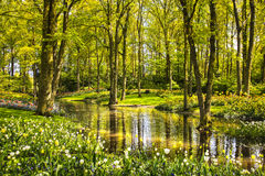 Garden in Keukenhof, tulip flowers, pond and trees. Netherlands stock photography