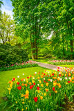 Garden in Keukenhof, tulip flowers and trees. Netherlands royalty free stock image